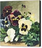 Winter Pansies Canvas Print by Louis Bombled
