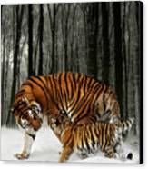 Winter Stroll Canvas Print by Julie L Hoddinott