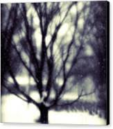 Winter Tree 3 Canvas Print