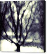 Winter Tree 3 Canvas Print by Perry Webster