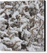 Winter's Contrast Canvas Print by Carol Groenen