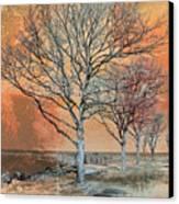 Winter's Dawn Canvas Print by Shawna Rowe