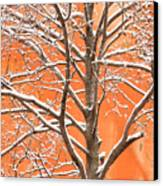 Winter's Touch Canvas Print by Carl Amoth