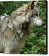 Wolf In The Woods Canvas Print by Donna Parlow