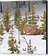 Wolf On Elk Kill Canvas Print