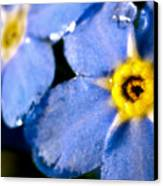 Wood Forget Me Not Blue Two Canvas Print by Ryan Kelly