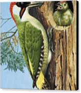 Woodpecker Canvas Print by RB Davis
