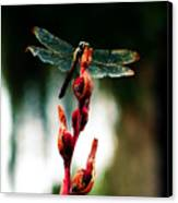 Wornout Dragonfly Canvas Print by Susie Weaver