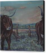 Wright Longhorns Canvas Print