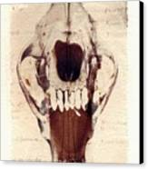 X Ray Terrestrial Canvas Print