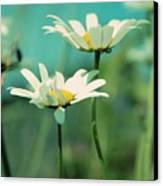 Xposed - S07b Canvas Print by Variance Collections