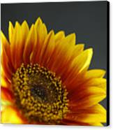 Yellow And Orange Gerber Canvas Print