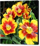Yellow And Red Flowers Canvas Print