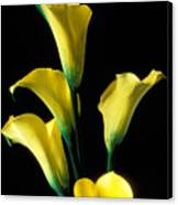 Yellow Calla Lilies  Canvas Print by Garry Gay
