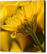 Yellow Drip Canvas Print