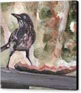 Yellow Eyed Bird Canvas Print by Sarah Lynch