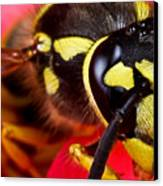 Yellow Jacket Canvas Print by Ryan Kelly