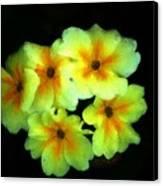 Yellow Primrose 5-25-09 Canvas Print