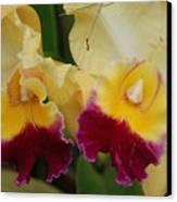 Yellow Purple Orchids Canvas Print
