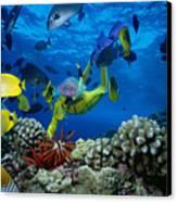 Yellow Scuba Diver Canvas Print by Ed Robinson - Printscapes