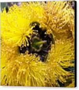 Yellow Tree Flower Canvas Print
