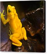 Yellow Tropical Frog Canvas Print