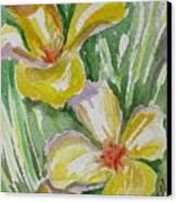 Yellow Wild Flowers II Canvas Print