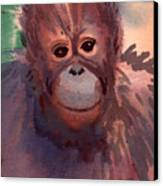 Young Orangutan Canvas Print