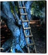 Young Woman Climbing A Tree Canvas Print