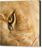 Your Lion Eye Canvas Print by Carolyn Marshall