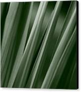 Yucca Spikes Canvas Print