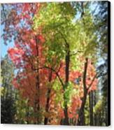 Yummy Fall Colors Canvas Print by Sandy Tracey