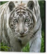 Zabu Canvas Print by Big Cat Rescue