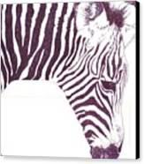 Zebra Colt Canvas Print