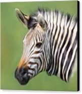 Zebra Portrait Canvas Print by Trevor Wintle