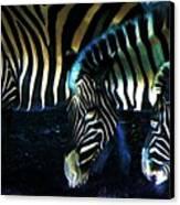 Zebras Glow Canvas Print