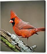 Portrait Of Cardinal  Canvas Print