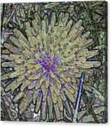 A Dandelion By A Different Color Canvas Print