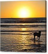 A Mans Best Friend Sunset Canvas Print