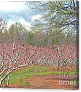 A Peach Orchard   Canvas Print