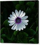 One Single Flower Canvas Print