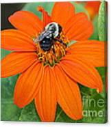 A Taste Of Honey Canvas Print