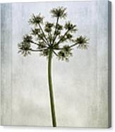 Aethusa Cynapium Canvas Print