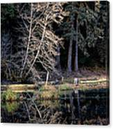 Alder Tree Reflection In Pond Canvas Print