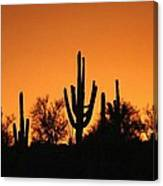 Arizona Sagurao Sunset Canvas Print