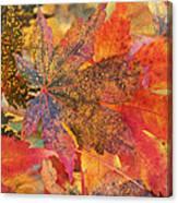 Autumn Audacity I Canvas Print