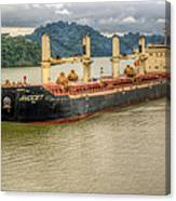 Avocet In The Panama Canal Canvas Print