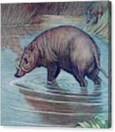 (babirusa Alfurus)        Date 1909 Canvas Print