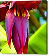 Banana Flower Glow Canvas Print