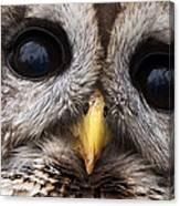 Barred Owl Eye's Canvas Print